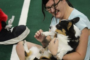 <p> July 20, 2019 No Homeless Pets Night at the Sharks Game - The Jacksonville Sharks invited your furry friends to a fun night at the Shark Tank to promote the No Homeless Pets Foundation in Jacksonville, FL.</p>