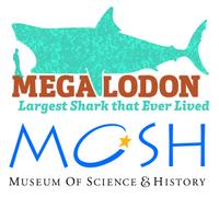 Megalodon MOSH.jpg